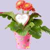 gratis-potje-met-plantje-voor-moederdag