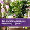gratis-planten-oppotten-bij-intratuin