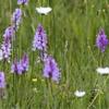 gratis-bloemzadenpakket-van-oerrr