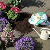 gratis-2-planten-bij-intratuin-tijdens-nationale-tuinweek
