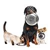 gratis-dierendagontbijt-hond-kat-knaagdier-intratuin-1-oktober